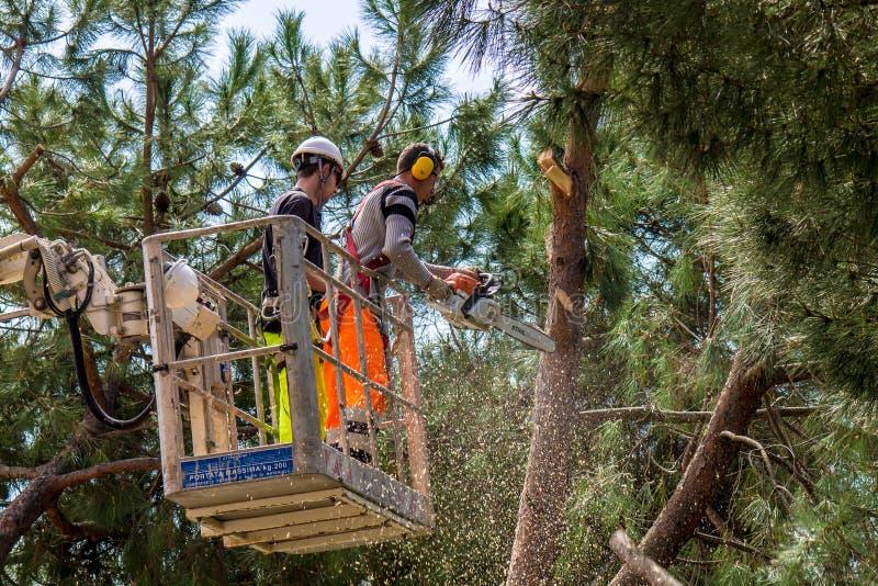 O lenhador profissional corta troncos foto de stock royalty free