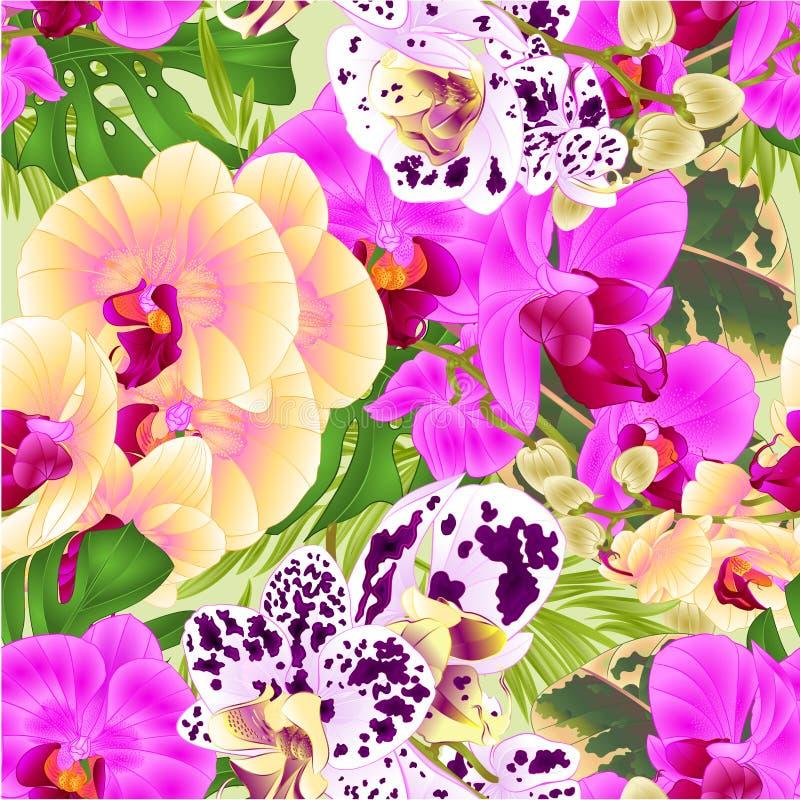 O lila amarelo das orquídeas sem emenda da haste da textura manchou a ilustração botânica f do vetor do vintage da planta tropica ilustração royalty free