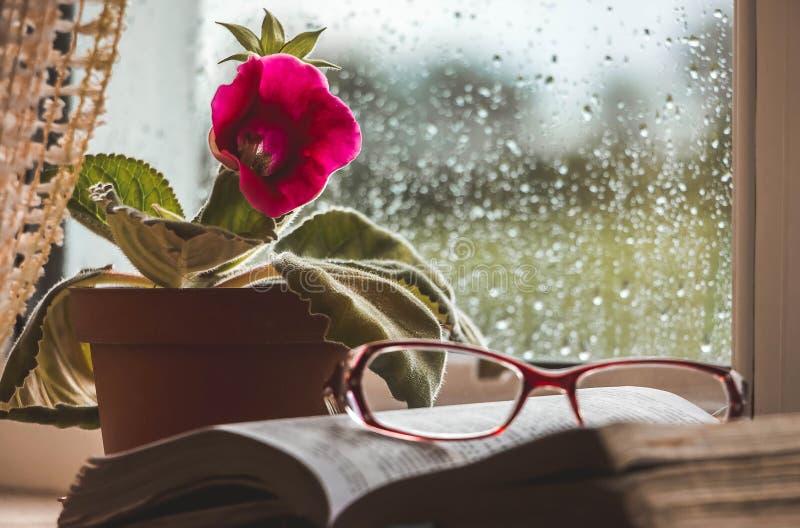 O livro com vidros está encontrando-se na janela, no fundo foto de stock