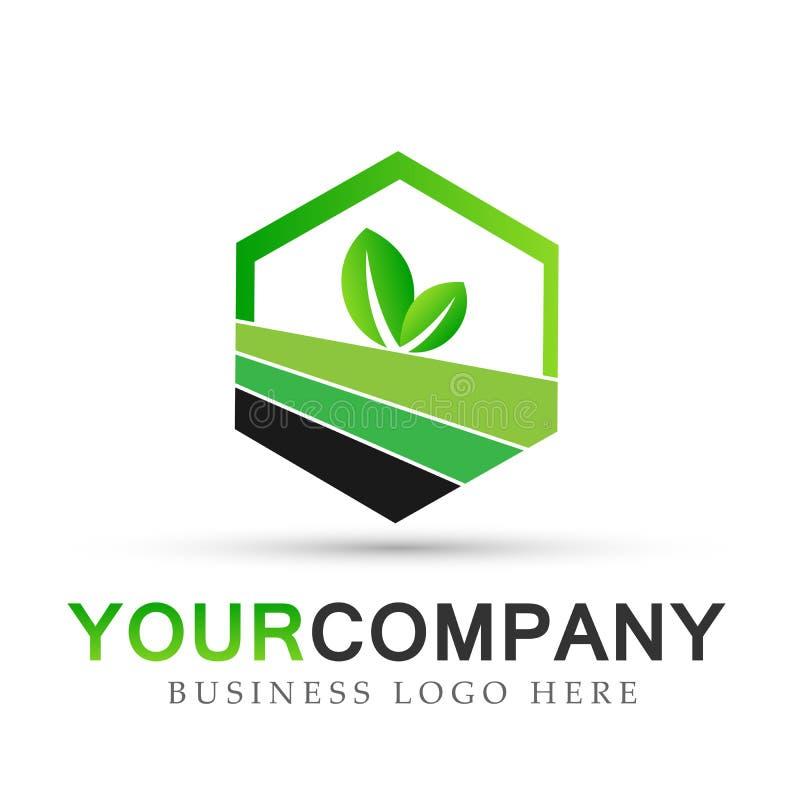 O logotipo da folha da planta no hexágono dado forma no vetor verde do ícone do símbolo projeta no fundo branco ilustração do vetor