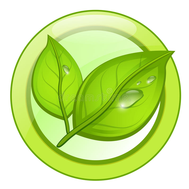 Logotipo verde da folha do eco com gotas da água