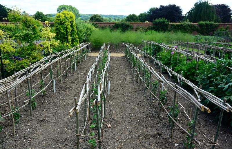 O lote vegetal do jardim murado da propriedade do pa?s fotografia de stock
