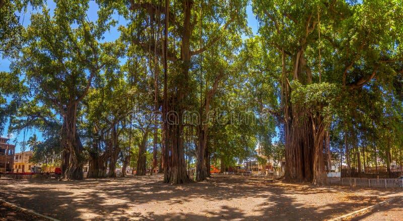 O lugar dos banyans imagens de stock royalty free