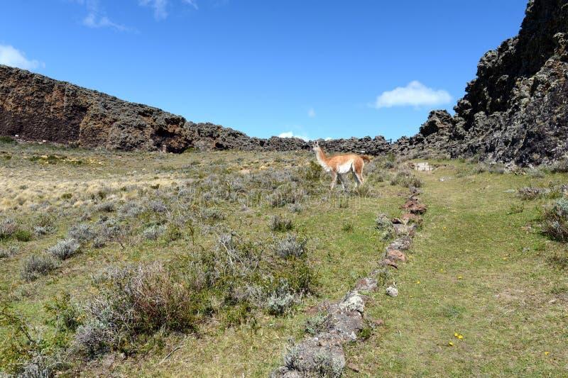 O lugar habitado por tribos indianos antigos no parque nacional Pali Aike imagem de stock royalty free