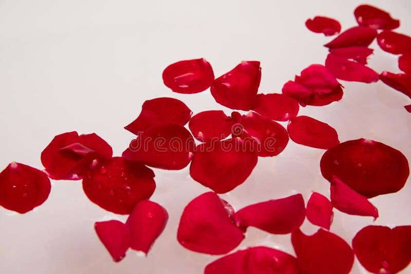 O luxo romântico, dia de Valentim aumentou pétala na água de banho, termas da casa, surpresa do cuidado do auto fotos de stock