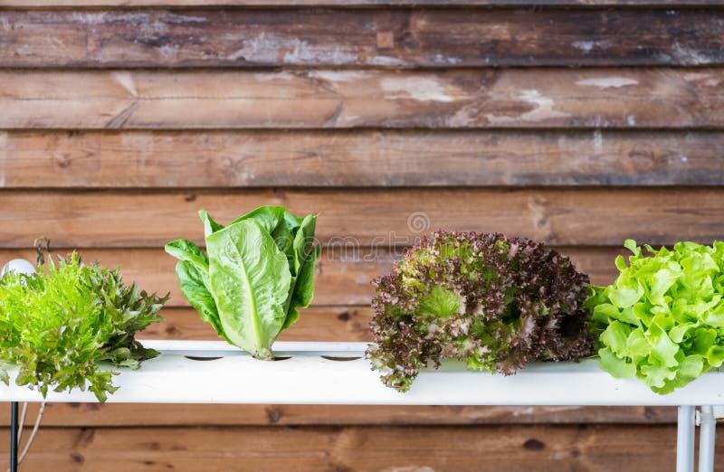 O método vegetal da hidroponia de crescer plantas é adubo e wate do uso da tecnologia da agricultura fotografia de stock