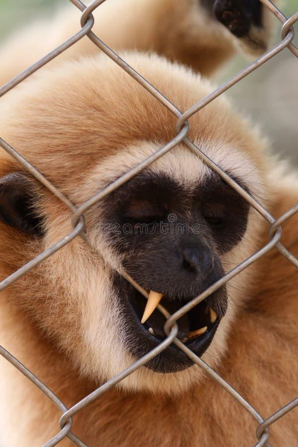 O macaco fotografia de stock