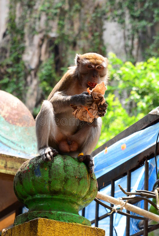 O macaco em Batu cava o templo hindu Gombak, Selangor malaysia imagens de stock royalty free