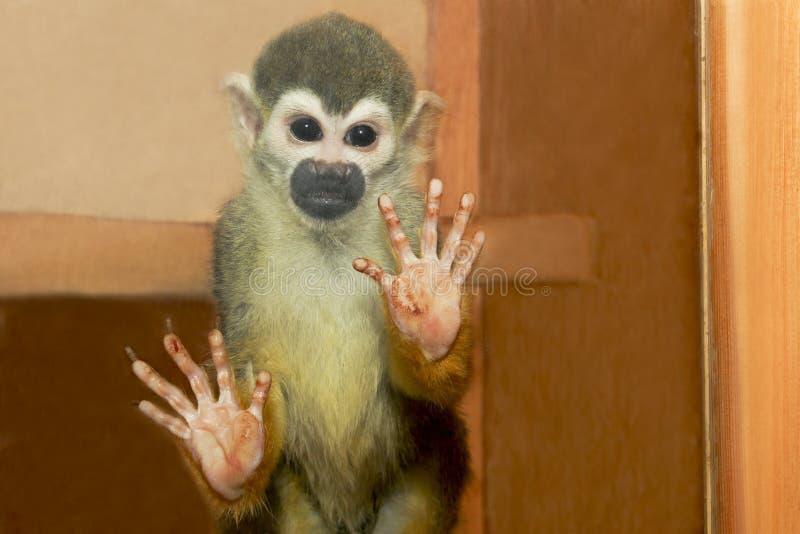 O macaco pequeno. fotografia de stock royalty free