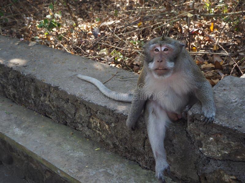 O macaco que descansa na selva foto de stock