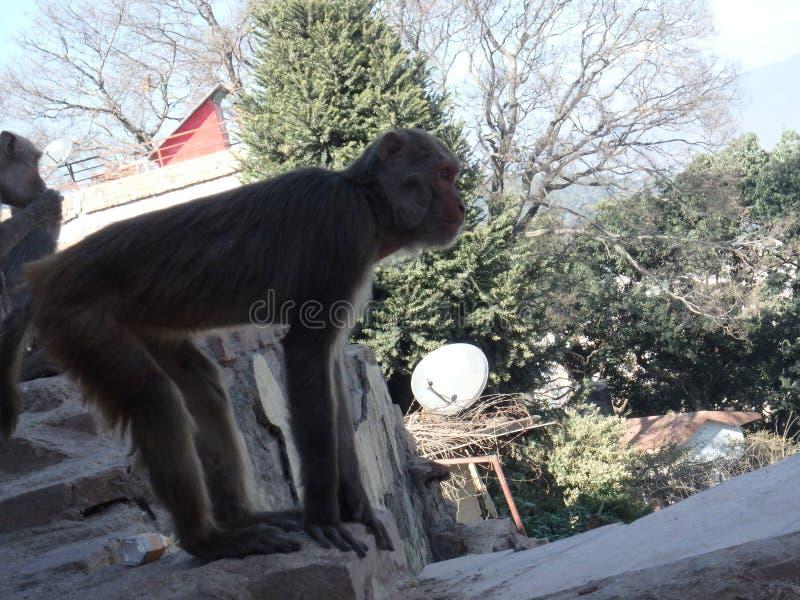 O macaco suporta o esticão fotos de stock royalty free