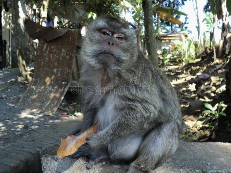 o macaco velho é sentar-se relaxado sob uma árvore fotografia de stock