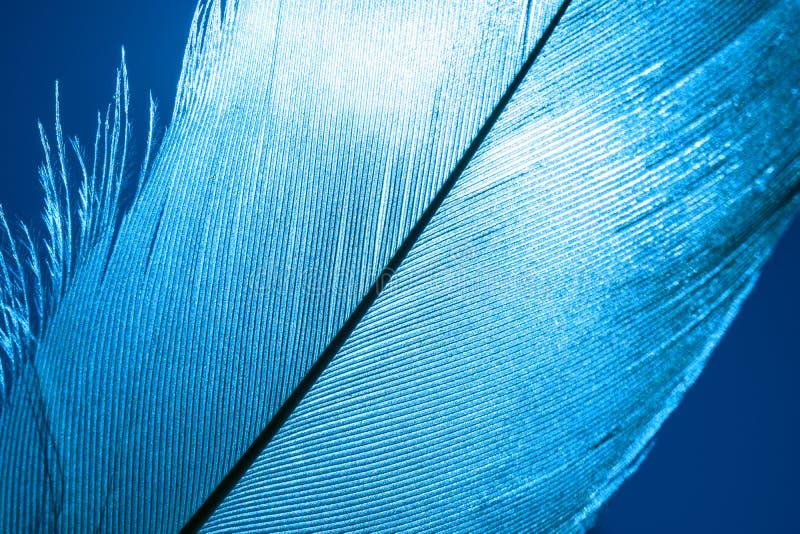 O macro disparou em um close-up azul da pena de pássaro fotografia de stock