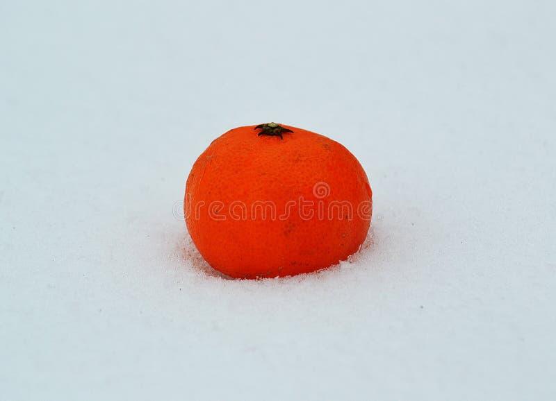 o mandarino alaranjado na neve imagens de stock royalty free