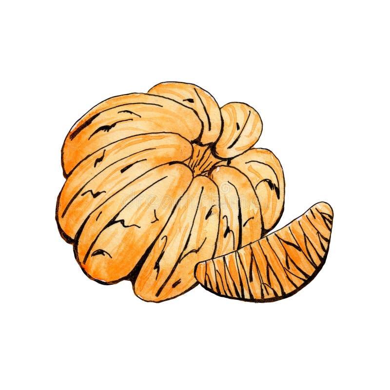 O mandarino e fatia descascados do mandarino na aquarela ilustração stock