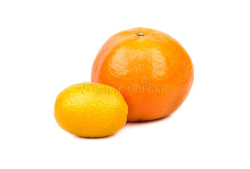 O mandarino e kumquat fotos de stock royalty free