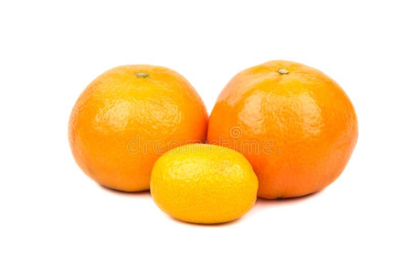 O mandarino e kumquat imagem de stock royalty free