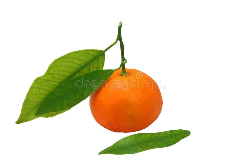 O mandarino isolado sobre o branco fotografia de stock