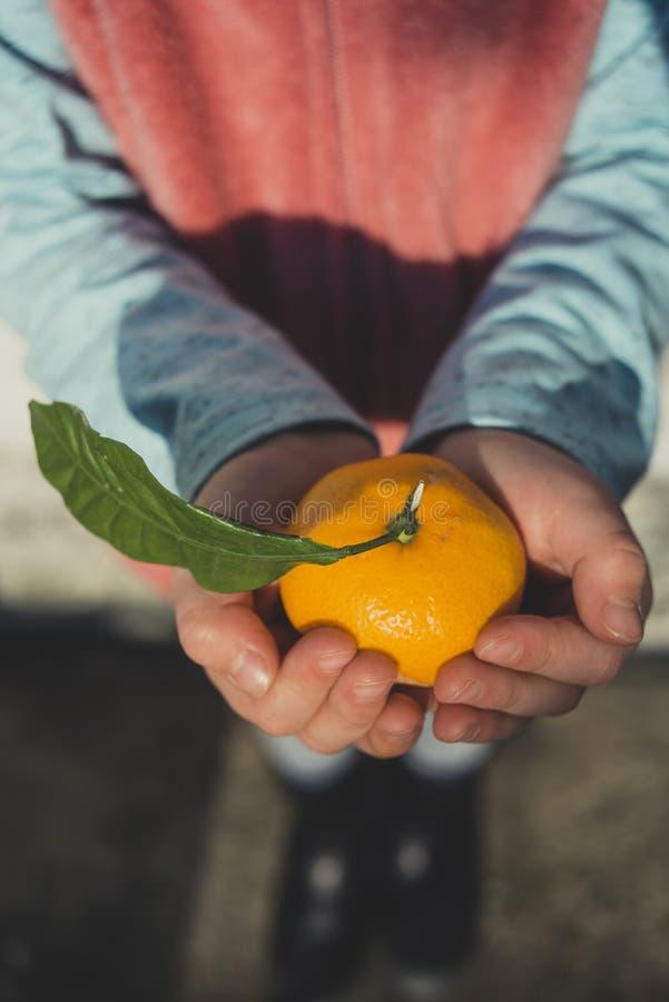 O mandarino nas mãos do ` um s da criança fotografia de stock
