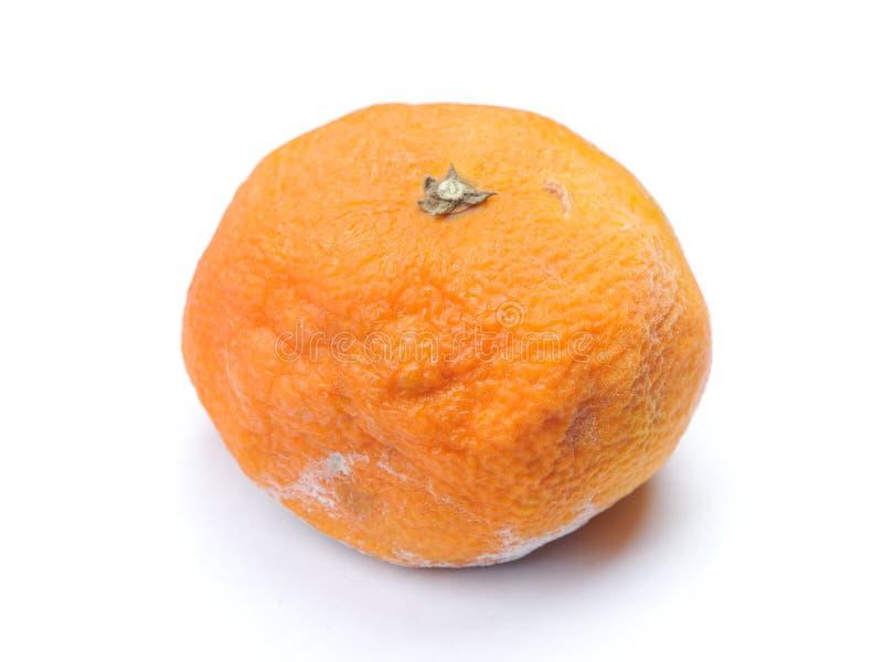 O mandarino podre Mouldy foto de stock