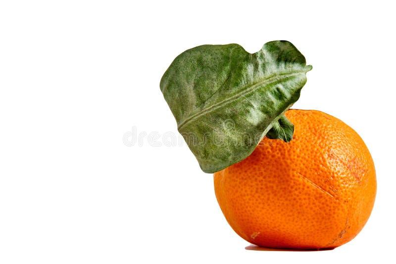 O mandarino secado com folhas em um fundo branco fotografia de stock royalty free