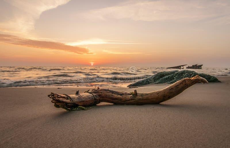 O mar descasca a história fotos de stock royalty free