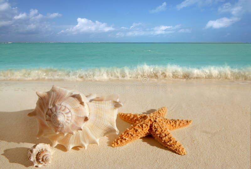 O mar descasca a turquesa as Caraíbas da areia dos starfish imagem de stock