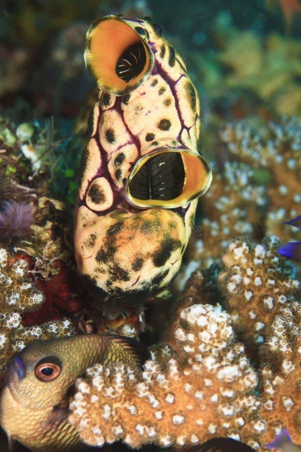 O mar esguincha imagens de stock royalty free