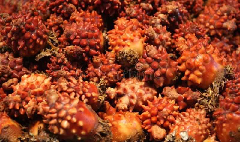 O mar esguincha o mercado de peixes (dos mong-gae) em Coreia do Sul fotografia de stock