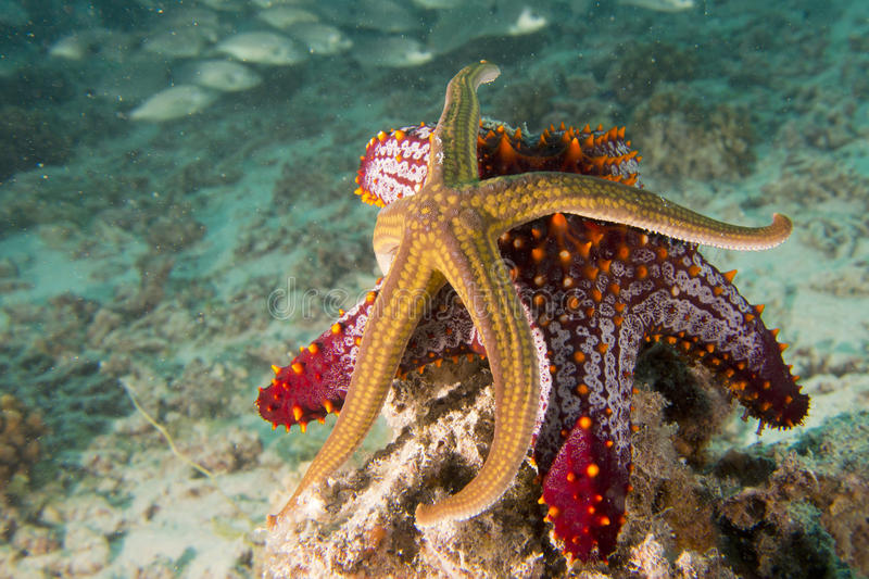 O mar protagoniza em uma paisagem subaquática colorida do recife fotos de stock royalty free