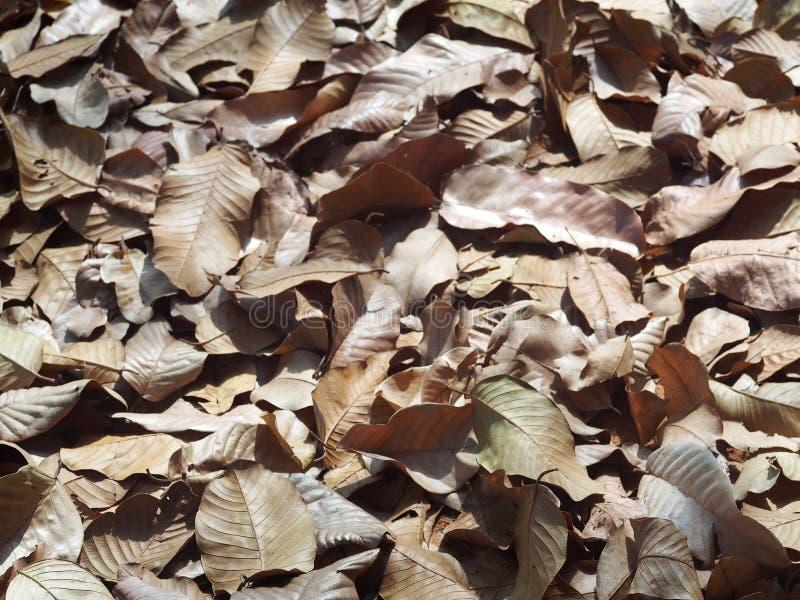 O marrom natural secou as folhas das folhas que caem no assoalho da selva imagem de stock