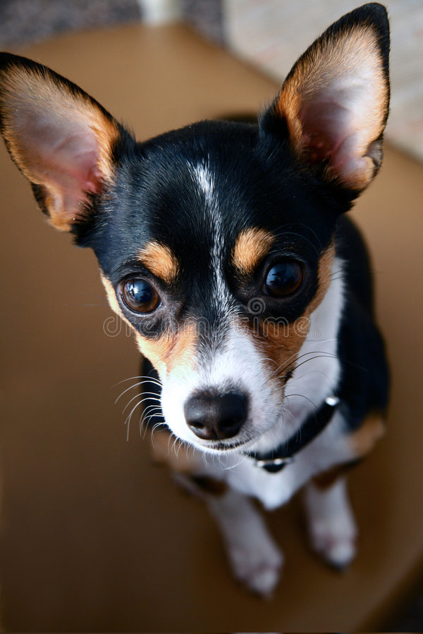 O melhor cão nunca! imagens de stock