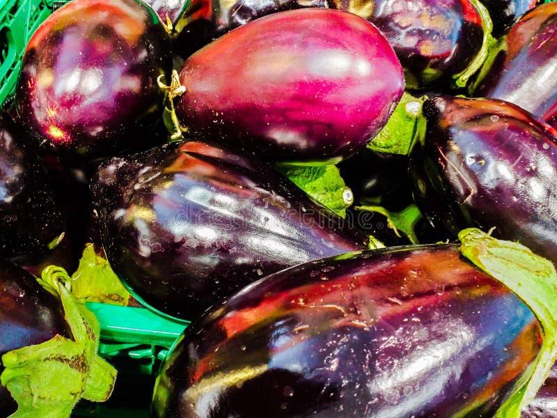 O melongena L do Solanum da beringela é uma planta herbácea, ereta, 30 elevações do cm a apenas sobre um medidor fotografia de stock