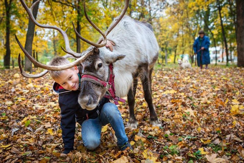 O menino abraça um cervo Parque do outono Dia do outono Uma comunica??o com os animais fotografia de stock