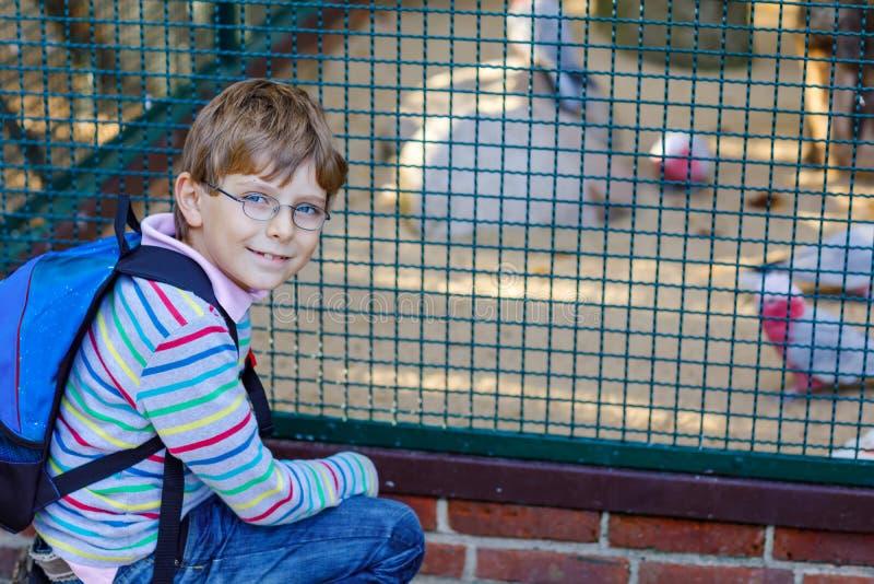 O menino da criança com vidros e a trouxa admiram pássaros diferentes como o papagaio no parque do jardim zoológico Aluno feliz q fotos de stock
