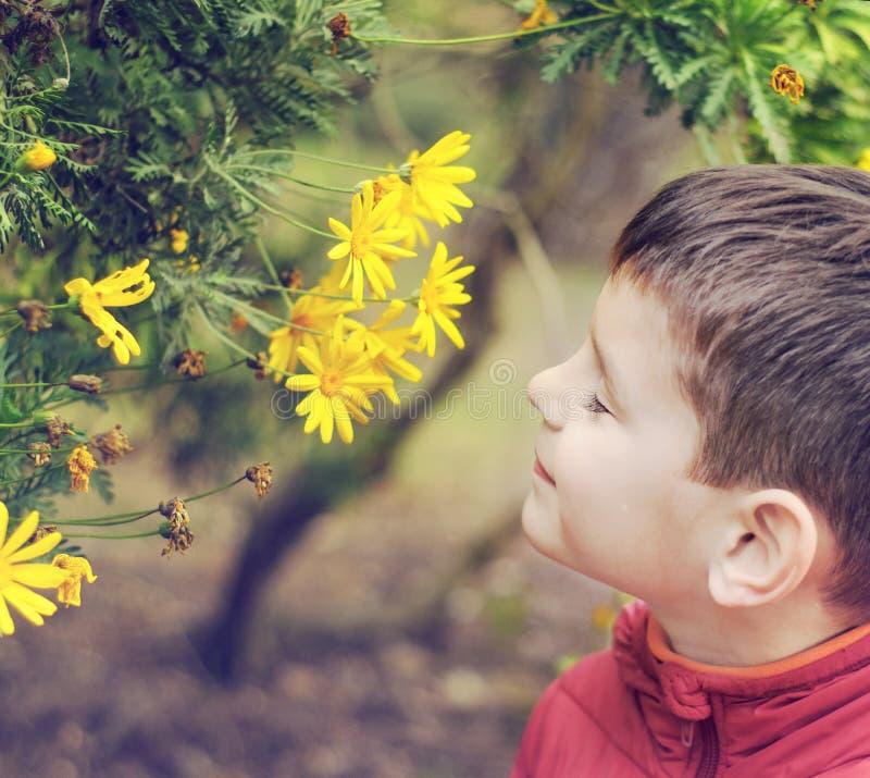 O menino da criança de 5 anos está cheirando flores imagem de stock