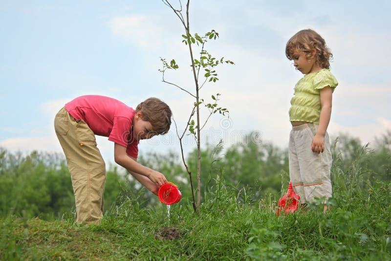 O menino e a menina derramam no seedling da árvore fotografia de stock