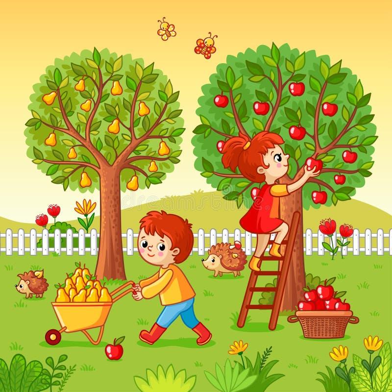O menino e a menina recolhem a colheita do fruto