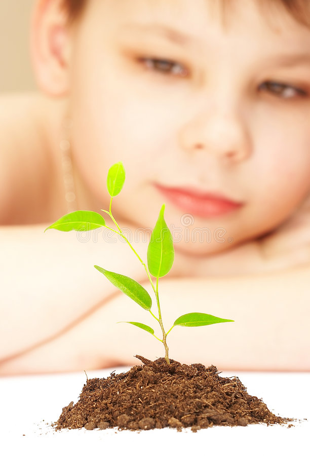 O menino e a planta nova. imagem de stock royalty free