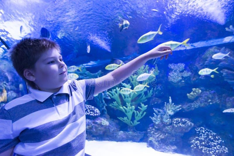 O menino em Oceanarium considera peixes foto de stock