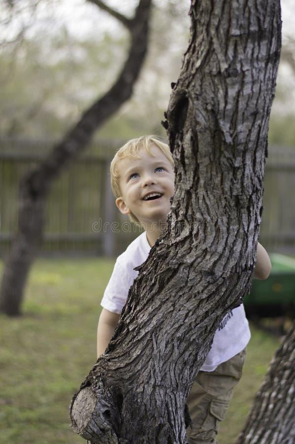 O menino escala a árvore imagens de stock royalty free