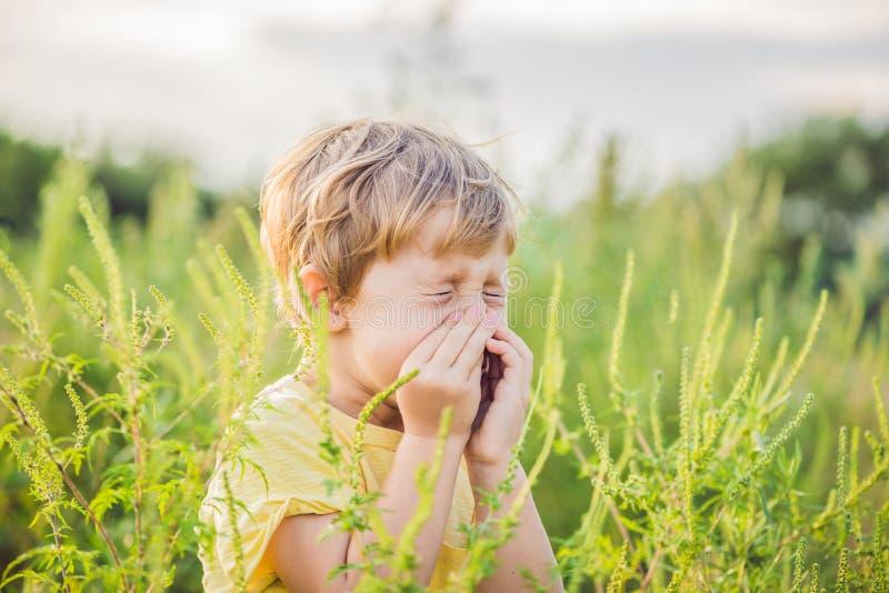 O menino espirra devido a uma alergia ao ragweed imagem de stock