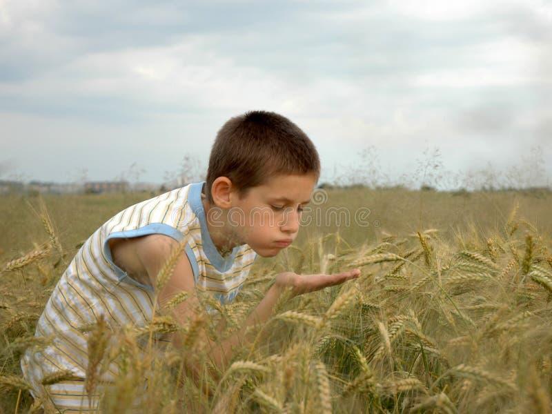 O menino está fundindo para fora o cereal fotos de stock royalty free