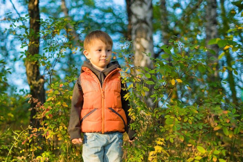 O menino está na floresta do outono entre as árvores fotos de stock