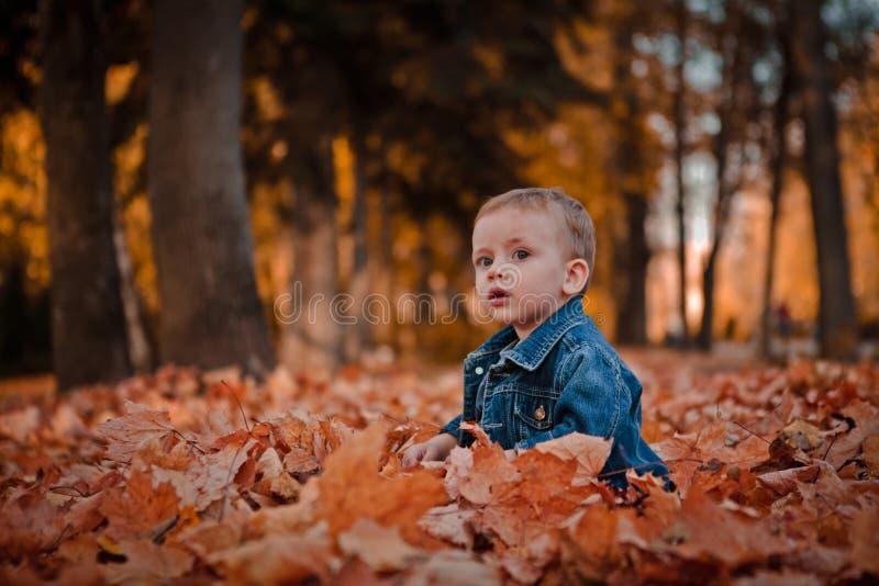 O menino feliz pequeno no casaco azul está jogando com as folhas no fundo dourado do parque do outono fotos de stock royalty free