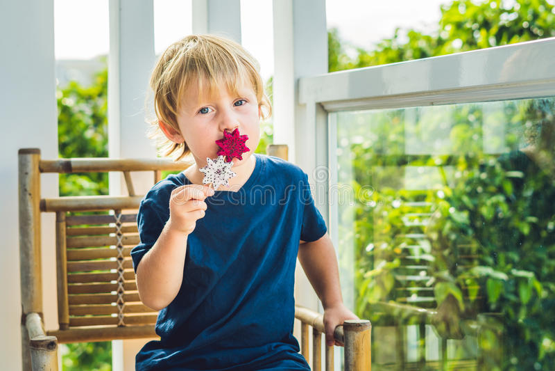 O menino guarda batidos de um fruto do dragão com uma folha da hortelã e uma palha bebendo imagem de stock royalty free