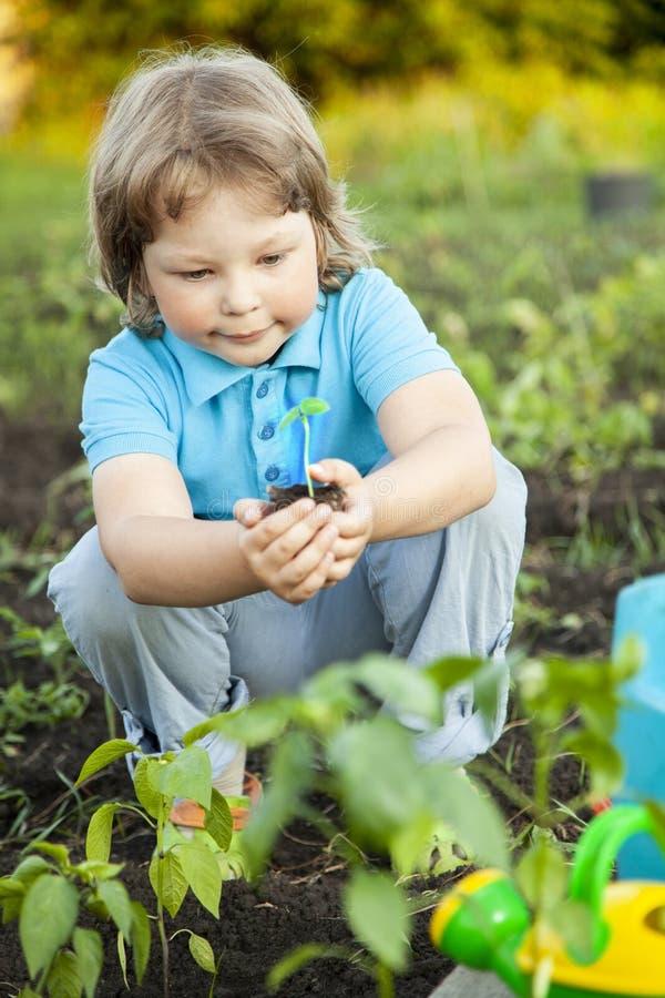 O menino no jardim admira a planta antes de plantar Broto verde nas mãos das crianças imagens de stock royalty free