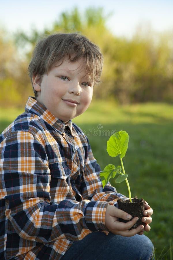 O menino no jardim admira a planta antes de plantar Broto verde nas m?os das crian?as imagens de stock royalty free