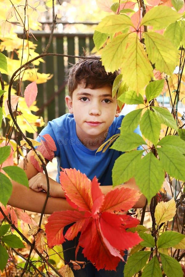 O menino no outono coloriu as folhas selvagens da uva imagens de stock royalty free