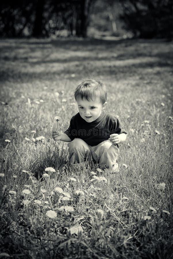 O menino novo senta-se fora de guardar uma flor do dente-de-leão - preto e Wh imagens de stock royalty free